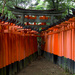 Between the Toriis at Fushimi Inari