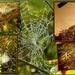 Bejeweled Webs by ubobohobo
