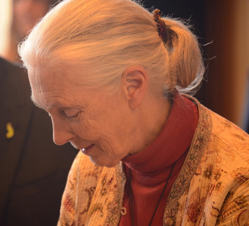 Jane Goodall by yaorenliu