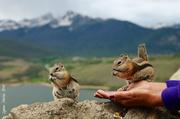 22nd Jun 2014 - Feeding the Chipmunks