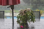 23rd Jun 2014 - ...and the rain came tumbling down!