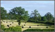 22nd Jun 2014 - Haygate field