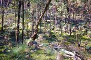 24th Jun 2014 - Aussie bush