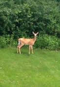 23rd Jun 2014 - Visitor