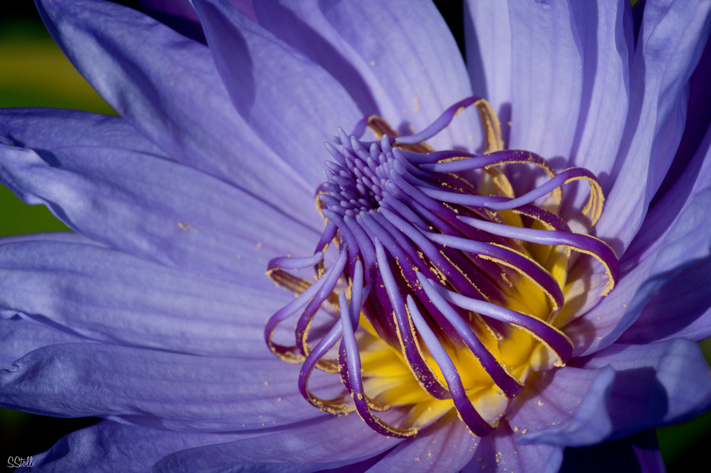 Waterlily crown by bella_ss
