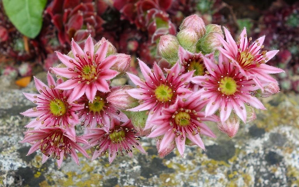 Pretty flowers  by cocobella