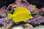 23rd Jun 2014 - A Fish Called Lemondrop
