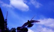 25th Jun 2014 - Bluebird