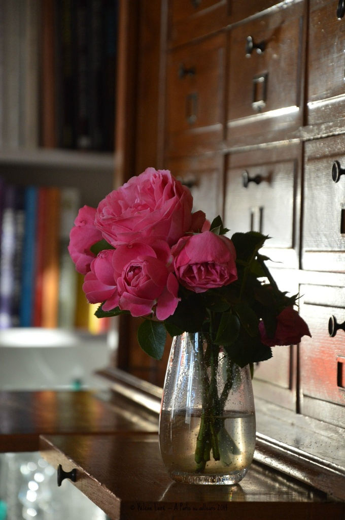 Roses from the garden by parisouailleurs