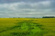 24th Jun 2014 - Fields