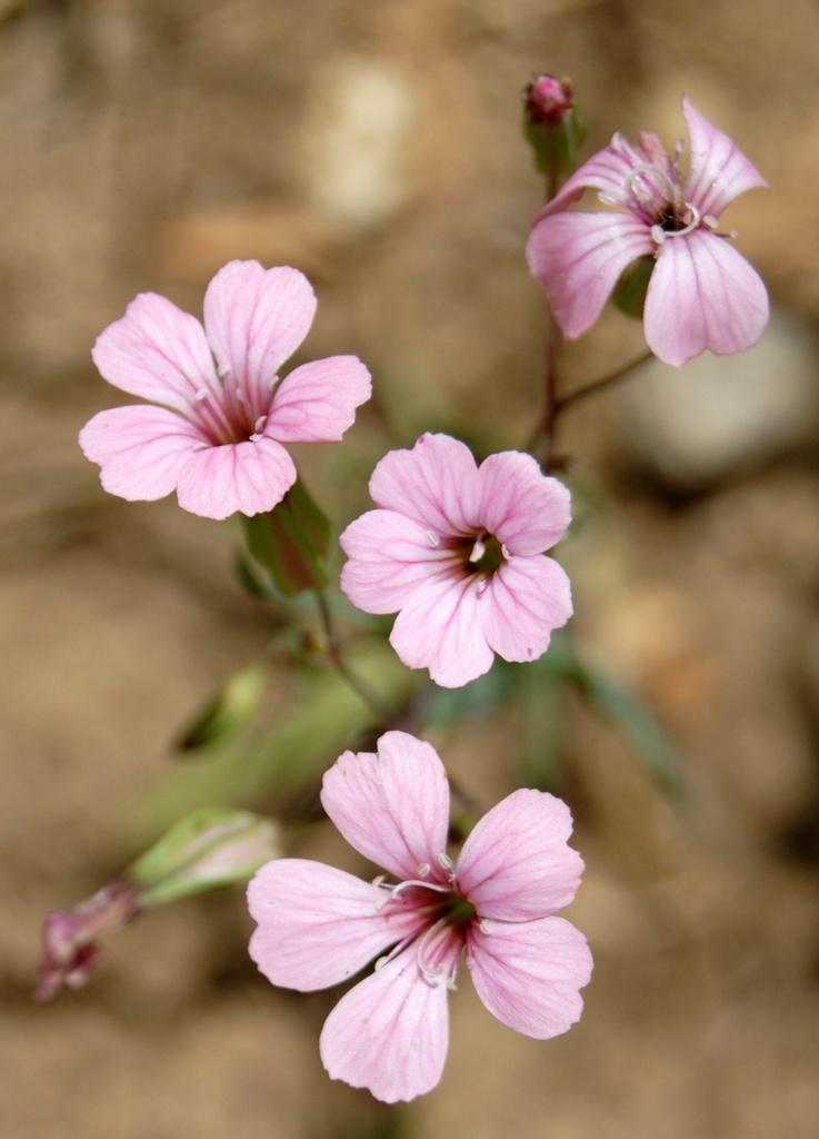 Little Pink Flowers by genealogygenie
