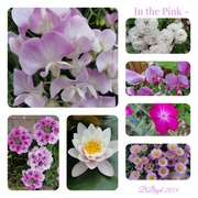 26th Jun 2014 - In the Pink