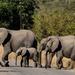 Elephant Family by salza