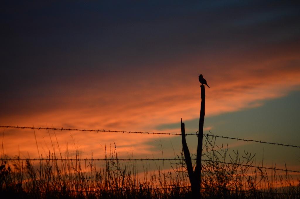Awaken the Dawn! by kareenking
