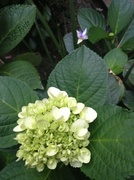 26th Jun 2014 - Floral Photobomb