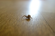 28th Jun 2014 - The unexpected guest