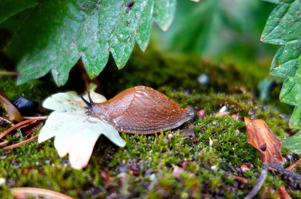 Slug by cocobella