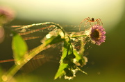 29th Jun 2014 - Spider and Bokeh