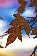 29th Jun 2014 - Autumn leaves