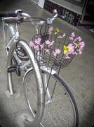 29th Jun 2014 - We love flowers everywhere