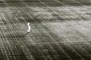 16th Jun 2014 - field of dreams