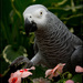 Parrot Among the Petals by lyndemc