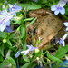 Frog in the Flowers by calm