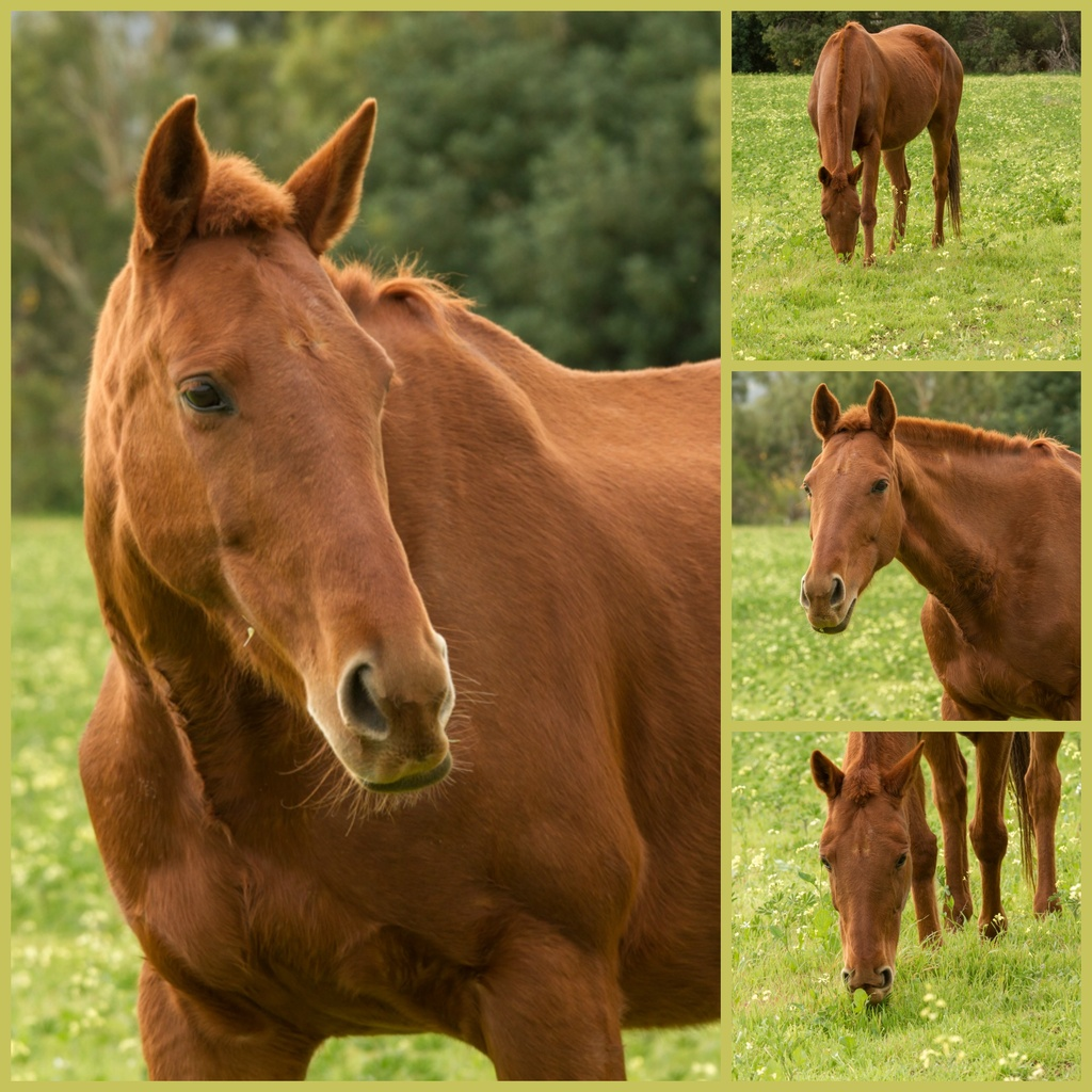Grazing horse  by gosia