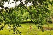 1st Jul 2014 - Summer pasture