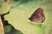 2nd Jul 2014 - Moth or Butterfly?