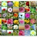 My Patchwork Quilt of Summery Scenes by filsie65