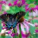 Metamorphosis by lisabell