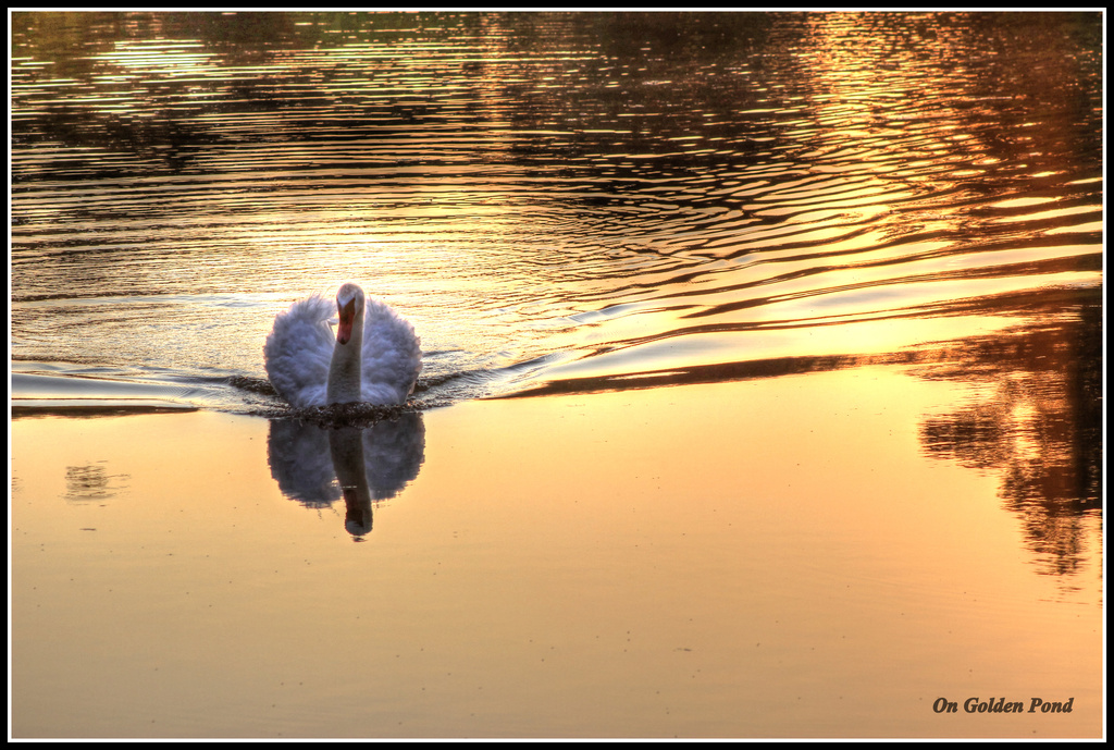 On Golden Pond by not_left_handed