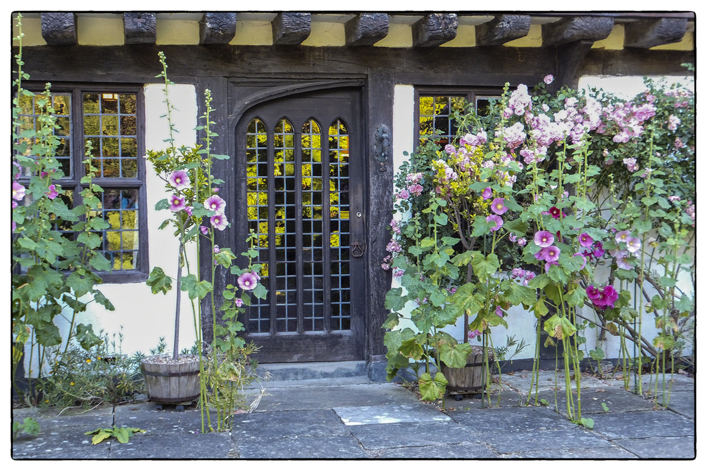 Hollyhocks by the door by ivan