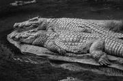 12th Jun 2014 - Crocs