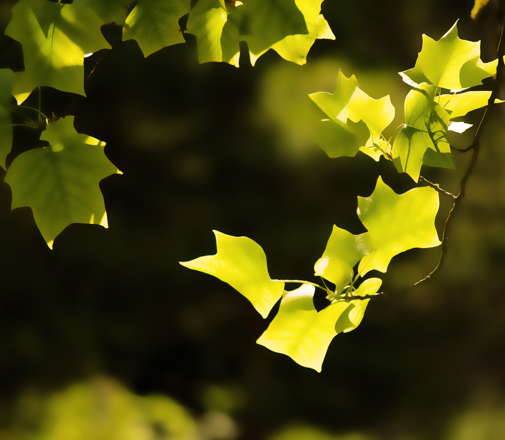 Leaves of light by nanderson