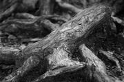 5th Jul 2014 - Roots
