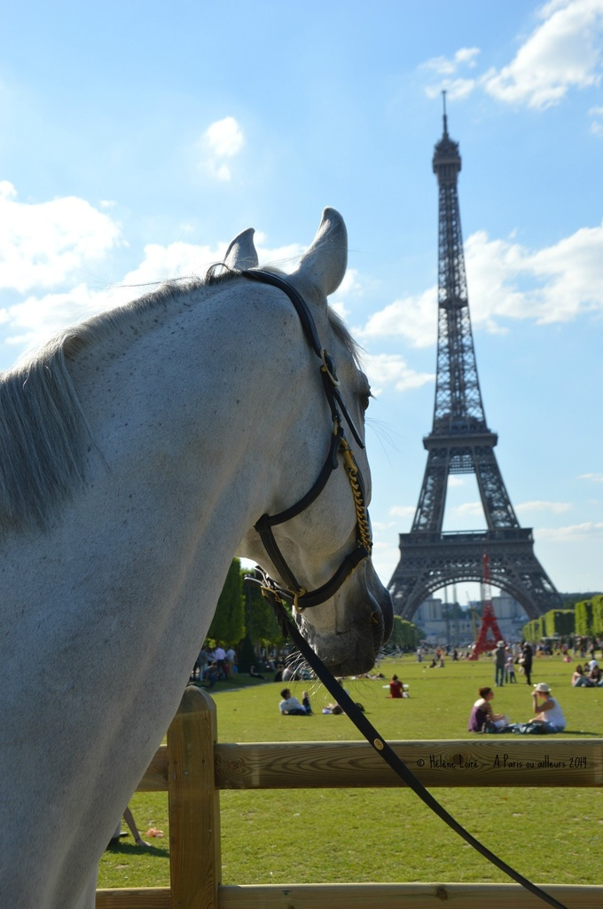 Paris Horse show near the Eiffel tower  by parisouailleurs