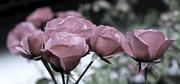 5th Jul 2014 - Paper roses