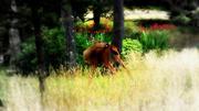 5th Jul 2014 - Deer, Ocean Park WA