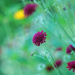 The colour purple! by fayefaye