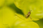 7th Jul 2014 - Grasshopper Guardian