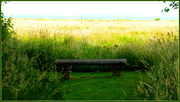 7th Jul 2014 - Bench by the bay