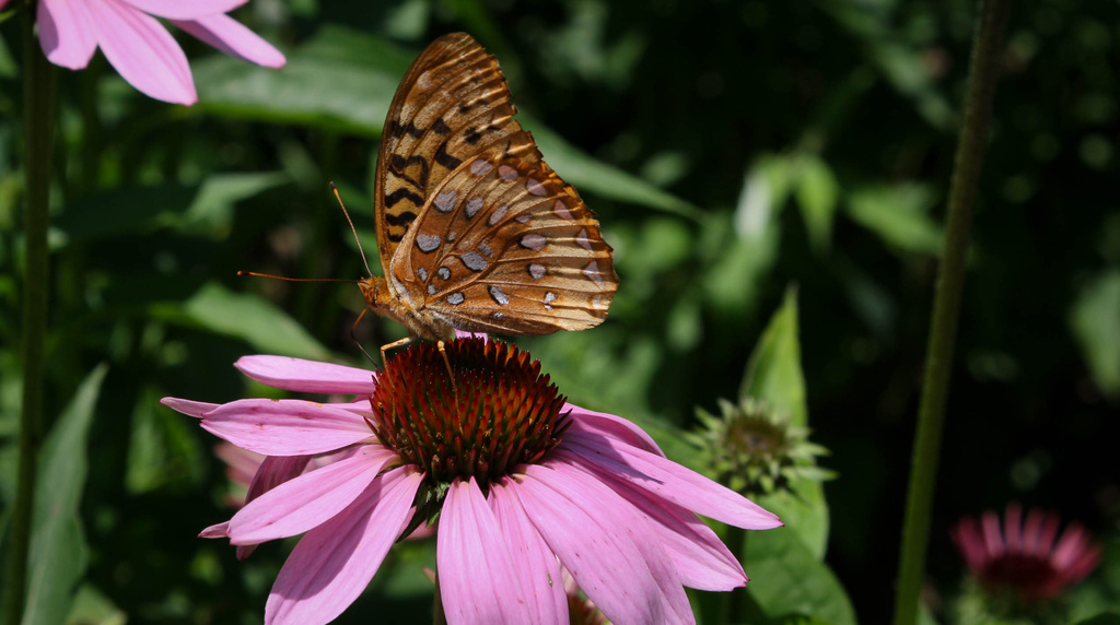 Butterfly on a flower by mittens