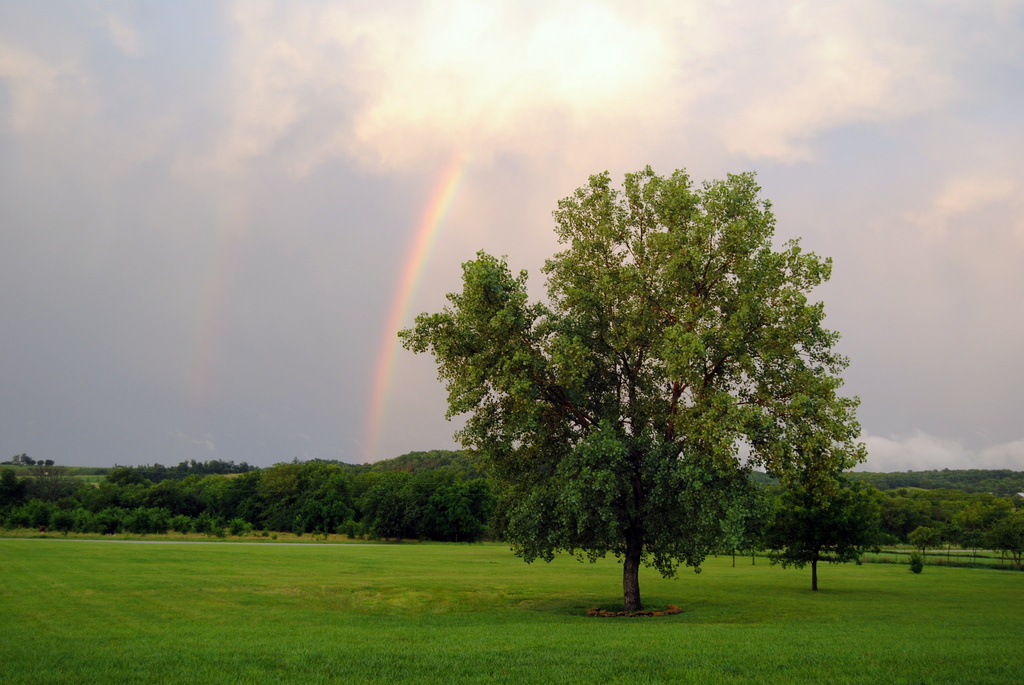 Be a Rainbow by genealogygenie