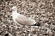 9th Jul 2014 - Seagull Textures.