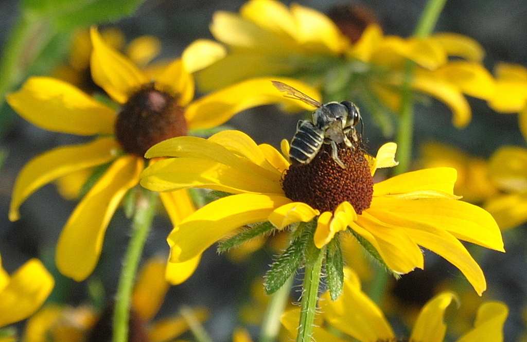 Beeing a Bee by genealogygenie