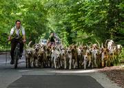 11th Jul 2014 - Hound exercise - 11-07
