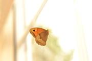 12th Jul 2014 - Lensbaby - Butterfly