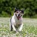 Running in clover - 12-07 by barrowlane